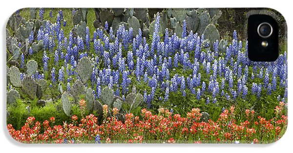 Bluebonnets Paintbrush And Prickly Pear IPhone 5 / 5s Case by Tim Fitzharris