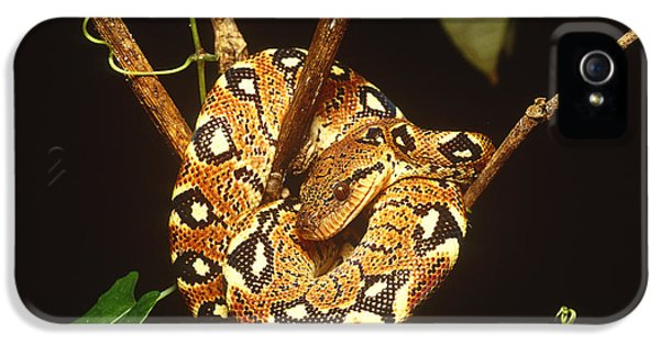 Boa Constrictor IPhone 5 / 5s Case by Art Wolfe