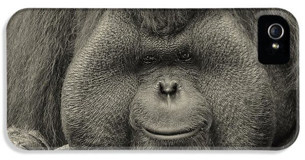 Bornean Orangutan II IPhone 5 / 5s Case by Lourry Legarde