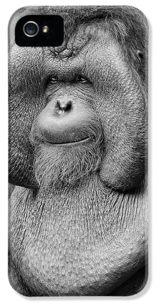 Bornean Orangutan IIi IPhone 5 / 5s Case by Lourry Legarde