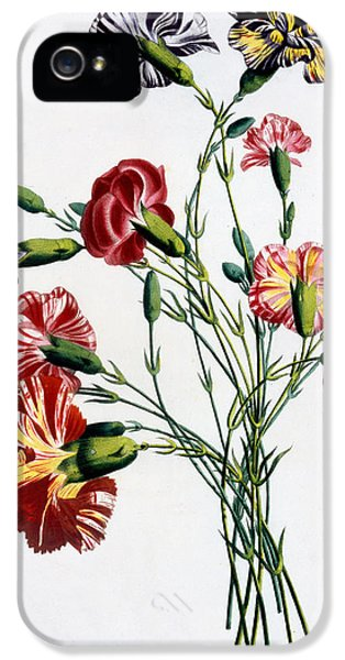 Carnations iPhone 5 Cases - Bouquet of Carnations iPhone 5 Case by Jean-Louis Prevost