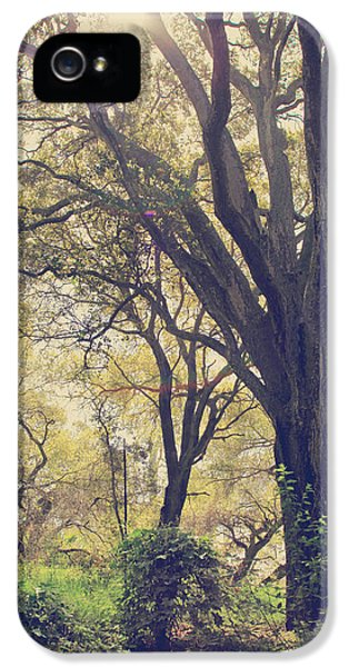 Trees iPhone 5 Cases - Brightening Up the Day iPhone 5 Case by Laurie Search