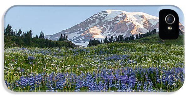 Mount Rainier iPhone 5 Cases - Brilliant Meadow iPhone 5 Case by Mike Reid