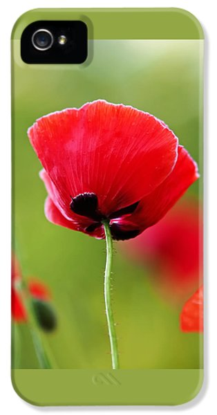 Poppy iPhone 5 Cases - Brilliant Red Poppy Flower iPhone 5 Case by Rona Black
