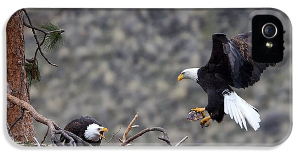 American Bald Eagle iPhone 5 Cases - Bringing Dinner iPhone 5 Case by Mike Dawson