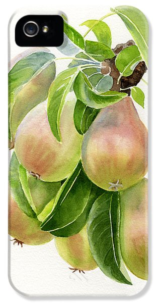 Bronze iPhone 5 Cases - Bronze Pears with white background iPhone 5 Case by Sharon Freeman