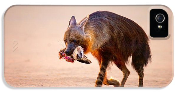 Eat iPhone 5 Cases - Brown hyena with bat-eared fox in jaws iPhone 5 Case by Johan Swanepoel