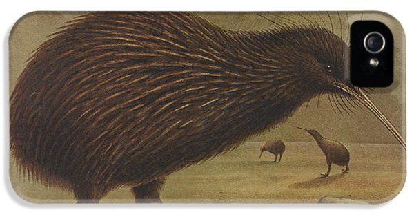 Brown Kiwi IPhone 5 / 5s Case by J G Keulemans