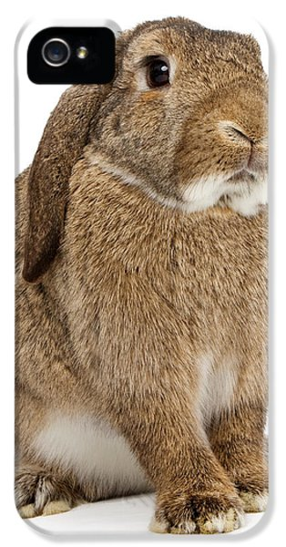 Young Rabbit iPhone 5 Cases - Brown Lop-earred Rabbit Isolated on White iPhone 5 Case by Susan  Schmitz