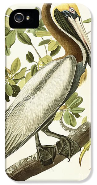Brown iPhone 5 Cases - Brown Pelican iPhone 5 Case by John James Audubon