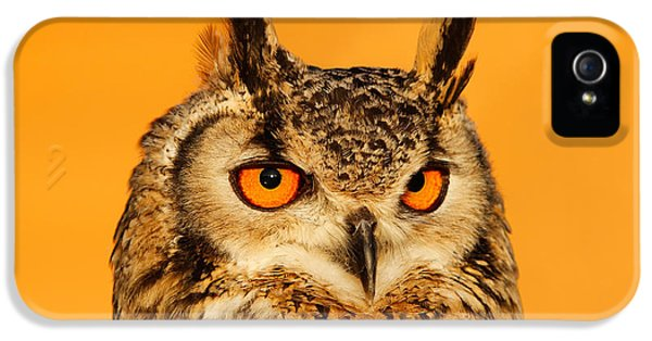 Orange iPhone 5 Cases - Bubo Bubo iPhone 5 Case by Roeselien Raimond