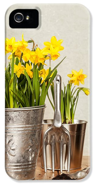 Potting Shed iPhone 5 Cases - Buckets Of Daffodils iPhone 5 Case by Amanda And Christopher Elwell