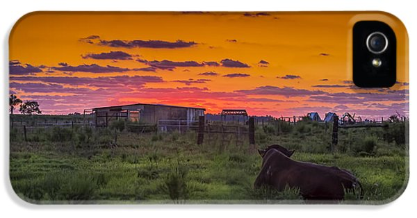 Farmland iPhone 5 Cases - Bull Sunset iPhone 5 Case by Marvin Spates