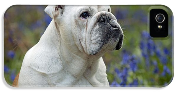 Canid iPhone 5 Cases - Bulldog In Bluebells iPhone 5 Case by John Daniels