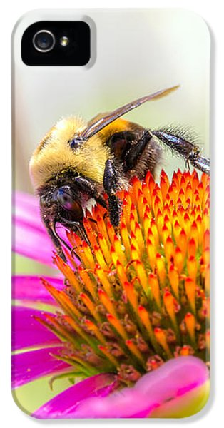 Bee iPhone 5 Cases - Bumble Bee iPhone 5 Case by Bob Orsillo