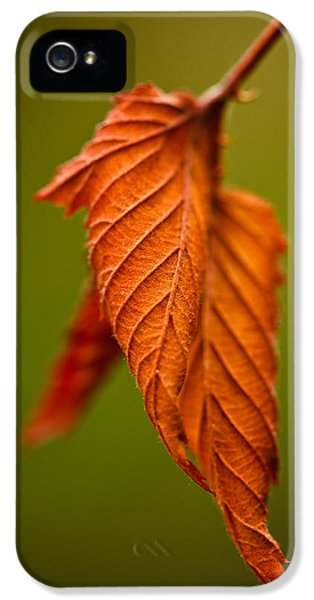 Leaf iPhone 5 Cases - Burn iPhone 5 Case by Shane Holsclaw