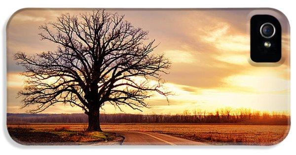 Burr Oak Silhouette IPhone 5 / 5s Case by Cricket Hackmann