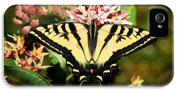 Swallowtail iPhone 5 Cases - Butterflies Are Free iPhone 5 Case by Donna Kennedy