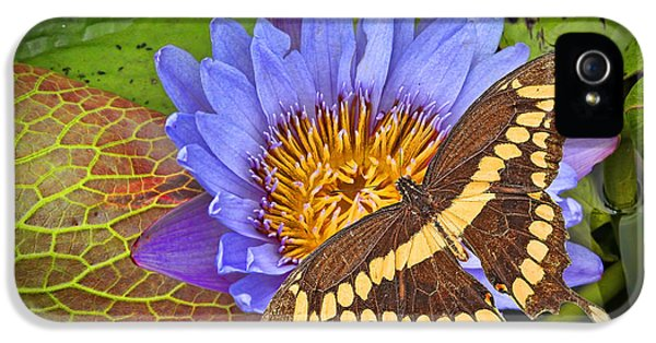 Hanukkah iPhone 5 Cases - Butterfly and Lily iPhone 5 Case by Rudy Umans