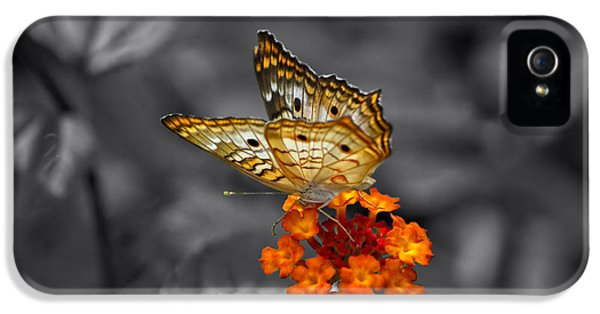 Central Il iPhone 5 Cases - Butterfly Wings Of Sun Light Selective Coloring Black and White Digital Art iPhone 5 Case by Thomas Woolworth
