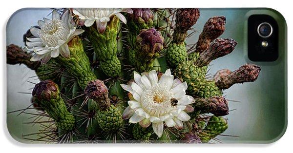Organ iPhone 5 Cases - Cacti Bouquet  iPhone 5 Case by Saija  Lehtonen
