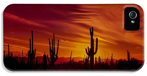 Hot Western iPhone 5 Cases - Cactus Glow iPhone 5 Case by Mary Jo Allen
