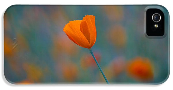 Poppy iPhone 5 Cases - California Poppy iPhone 5 Case by Anthony Bonafede