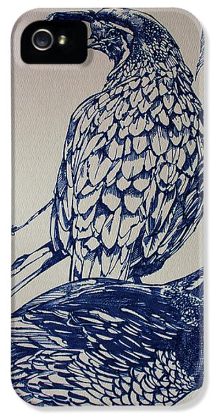 State Bird iPhone 5 Cases - California Quail iPhone 5 Case by Derrick Higgins