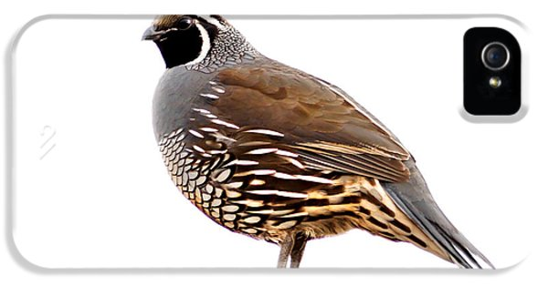 State Bird iPhone 5 Cases - California Quail iPhone 5 Case by Robert Bales