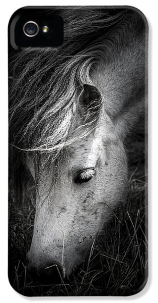 Mane iPhone 5 Cases - Call Me The Wind iPhone 5 Case by Shane Holsclaw