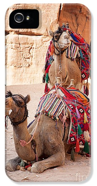 Arab iPhone 5 Cases - Camels in Petra iPhone 5 Case by Jane Rix