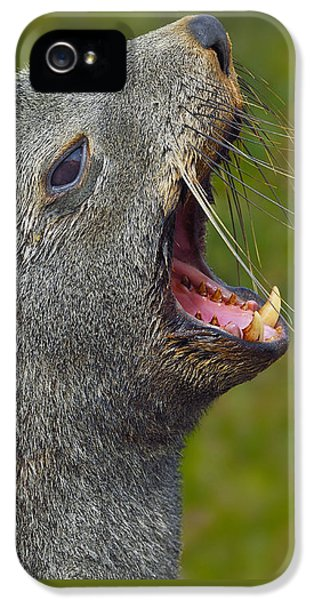 Can You Hear Me Now? IPhone 5 / 5s Case by Tony Beck
