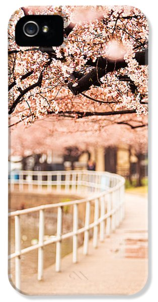 District Columbia iPhone 5 Cases - Canopy of Cherry Blossoms Over a Walking Trail iPhone 5 Case by Susan  Schmitz