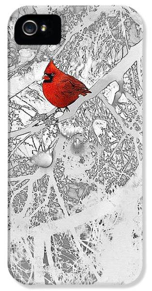 Cardinal In Winter IPhone 5 / 5s Case by Ellen Henneke