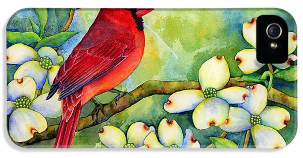 Songbird iPhone 5 Cases - Cardinal on Dogwood iPhone 5 Case by Hailey E Herrera