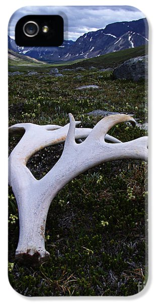 Caribou iPhone 5 Cases - Caribou Antler Jonas Pass Jasper iPhone 5 Case by Bob Christopher