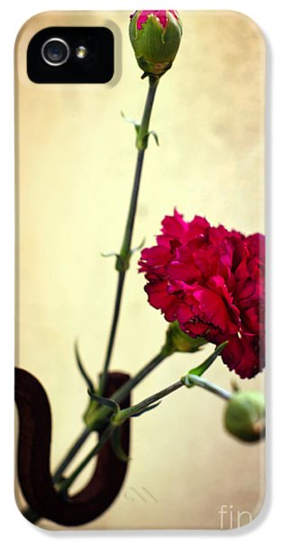 Carnations iPhone 5 Cases - Carnation iPhone 5 Case by Carlos Caetano