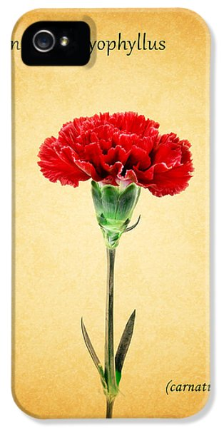 Carnations iPhone 5 Cases - Carnation iPhone 5 Case by Mark Rogan