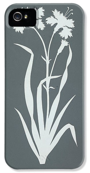 Carnations iPhone 5 Cases - Carnation  iPhone 5 Case by Philipp Otto Runge