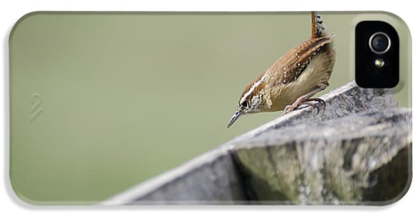 Carolina Wren Two IPhone 5 / 5s Case by Heather Applegate