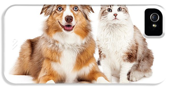 High Key iPhone 5 Cases - Cat and Happy Dog Together iPhone 5 Case by Susan  Schmitz