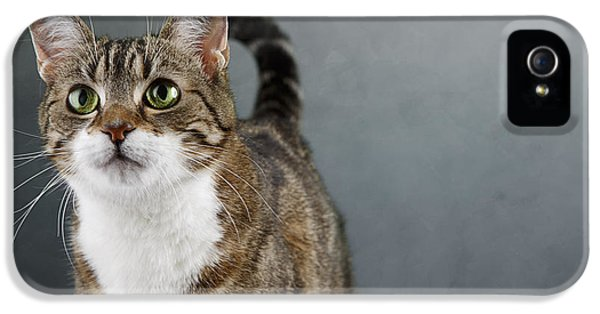 Cat Portrait IPhone 5 / 5s Case by Nailia Schwarz