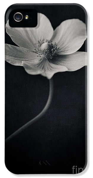Pistil iPhone 5 Cases - Catch The Light iPhone 5 Case by Priska Wettstein