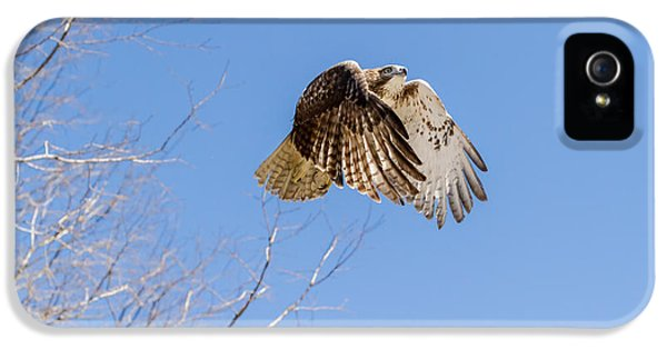 Redtail iPhone 5 Cases - Catching the Sun iPhone 5 Case by Bill  Wakeley
