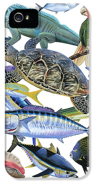 Conch iPhone 5 Cases - Cayman collage iPhone 5 Case by Carey Chen