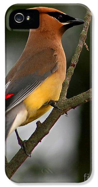 Cedar Wax Wing II IPhone 5 / 5s Case by Roger Becker