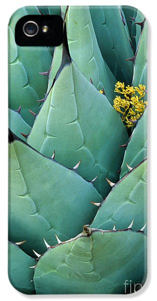 Ecology iPhone 5 Cases - Century Plant and Tiny Blossom iPhone 5 Case by Inge Johnsson