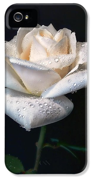 Ivory Rose iPhone 5 Cases - Champagne Rose Flower Portrait iPhone 5 Case by Jennie Marie Schell
