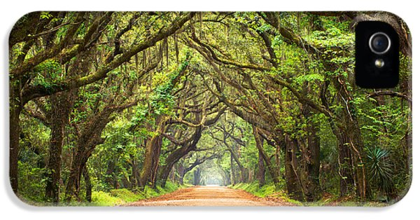 Leaf iPhone 5 Cases - Charleston SC Edisto Island - Botany Bay Road iPhone 5 Case by Dave Allen