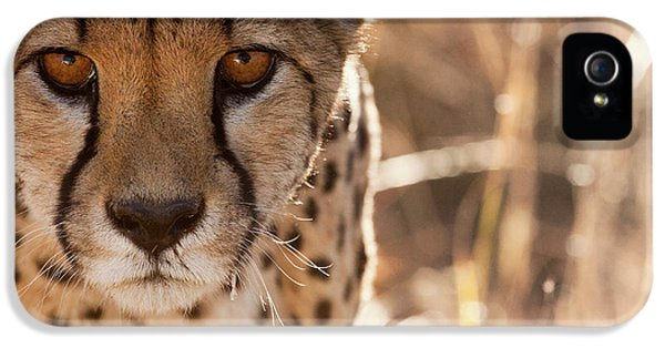 Cheetah Conservation Fund, Namibia IPhone 5 / 5s Case by Janet Muir